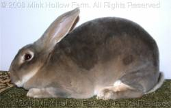 An Illustrated Guide to Rabbit Coat Color Genetics* [Mink